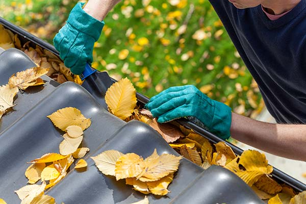 Fascia and Gutter Cleaning Services